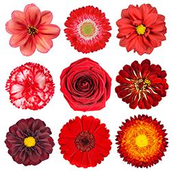 【幸せを運ぶ風水】飾る花を選んで「幸運」を引き寄せよう