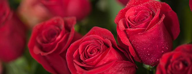 薔薇の魔力で彼を引き寄せる……逢瀬を求めて