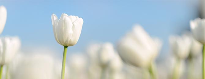 「ちょっとだけ判断に迷った」時に後押ししてくれる花占い